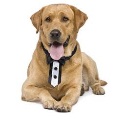 Tuxedo-Dog-Collar-m