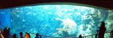 long tank panorama